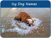 Icy Dog Names