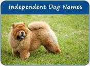Independent Dog Names
