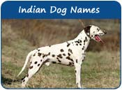 Indian Dog Names