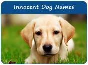 Innocent Dog Names