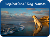 Inspirational Dog Names