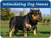 Intimidating Dog Names