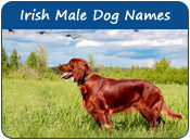 Irish Male Dog Names