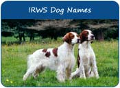 Irish Red and White Setter Dog Names