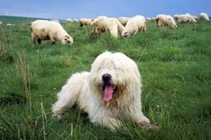 Top 20 Popular Irish Dog Names In America