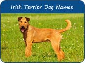 Irish Terrier Dog Names