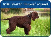 Irish Water Spaniel Dog Names