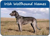 Irish Wolfhound Dog Names