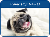 Ironic Dog Names