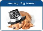 January Dog Names
