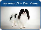 Japanese Chin Dog Names