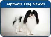 Japanese Dog Names