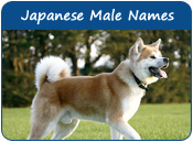 Japanese Male Dog Names