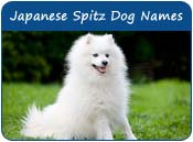 Japanese Spitz Dog Names