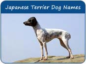 Japanese Terrier Dog Names