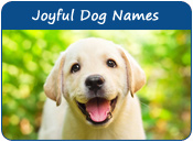 Joyful Dog Names