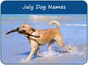 July Dog Names
