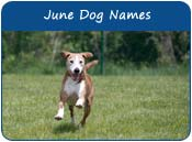 June Dog Names