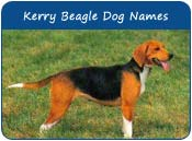 Kerry Beagle Dog Names