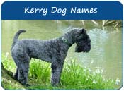 Kerry Blue Terrier Dog Names
