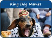 King Dog Names