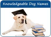 Knowledgeable Dog Names
