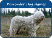 Komondor Dog Names