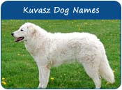 Kuvasz Dog Names