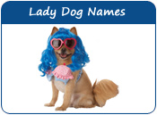 Lady Dog Names, Girl Dog Names