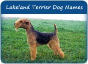 Lakeland Terrier Dog Names
