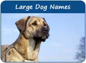 Large Dog Names