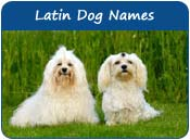 Latin Dog Names