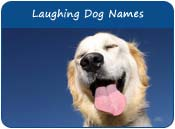 Laughing Dog Names