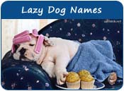 Lazy Dog Names