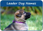 Leader Dog Names