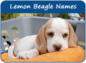 Lemon Beagle Dog Names