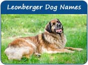 Leonberger Dog Names