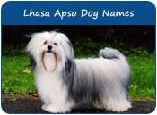 Lhasa Apso Dog Names