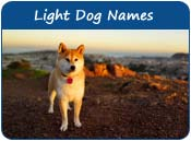 Light Dog Names