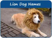 Lion Dog Names