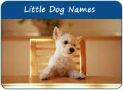 Little Dog Names