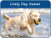 Lively Dog Names