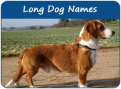 Long Dog Names