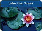 Lotus Dog Names
