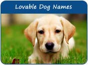 Lovable Dog Names