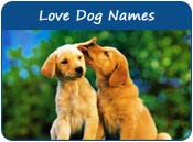 Love Dog Names