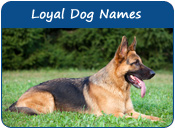 Loyal Dog Names