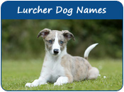 Lurcher Dog Names