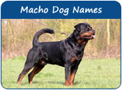 Macho Dog Names
