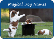 Magical Dog Names